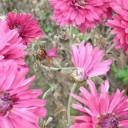 Do Botanické zahrady nejen za květinami