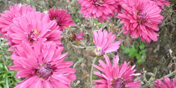 Květy v Botanické zahradě Troja