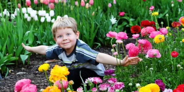 Tulipány na jaře