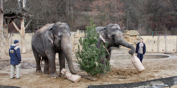 Zoo Praha Vánoce